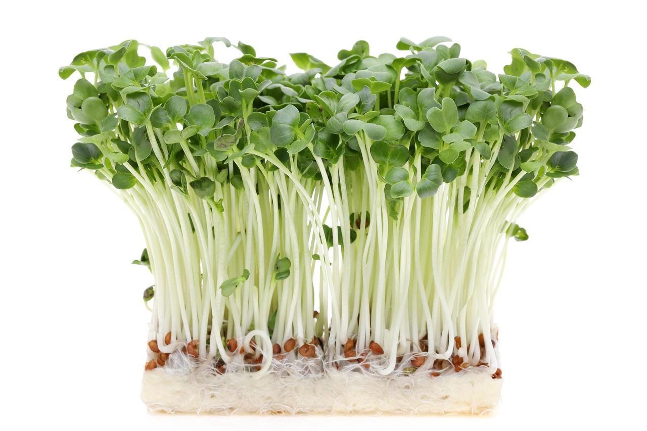 画像: 水耕栽培のやり方は毎日水を取り替えるだけで超簡単! 誰でも野菜くずで家庭菜園ができる!