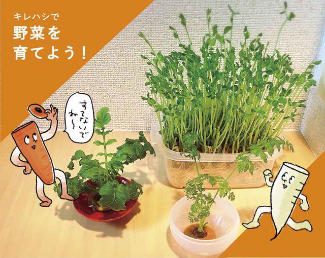 画像: 【野菜くずで水耕栽培】簡単・節約な家庭菜園をはじめよう! ~豆苗・大根・人参~ - ハピキャン(HAPPY CAMPER)