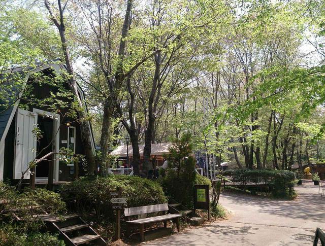 画像: キャンプ&BBQ | フォンテーヌの森 | つくば市