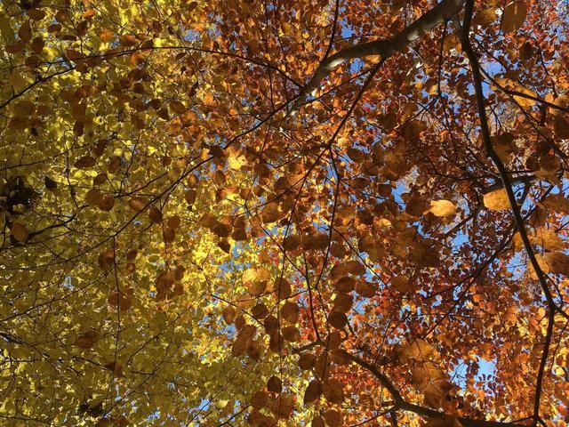 画像: カヤックから見上げた紅葉 (筆者撮影)