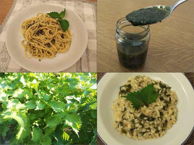画像: 【簡単レシピ】大葉を栽培して大量収穫! パスタやリゾットなどおすすめ料理も紹介! - ハピキャン(HAPPY CAMPER)