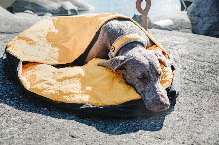 画像1: 【ペット同伴キャンプ】犬や猫とのキャンプを楽しむ方法や体調不良になった場合の確認すべきこと
