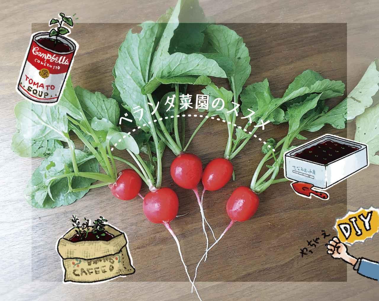 画像: 【ベランダ菜園】自作プランターで簡単にできる! おすすめ早採れ野菜やハーブも紹介 - ハピキャン(HAPPY CAMPER)