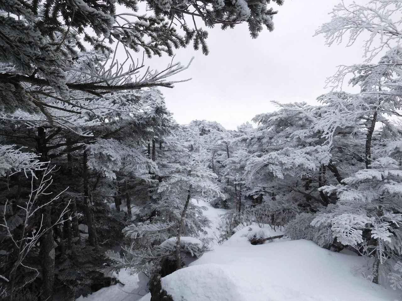 画像: 北横岳山頂に向かう登山道の風景 (筆者撮影)