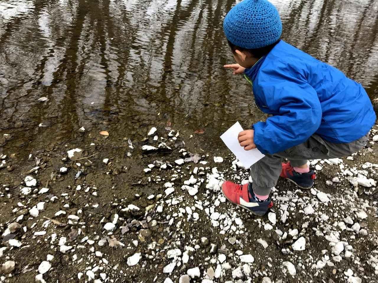 画像: 冷たい水を探している様子 (筆者撮影)