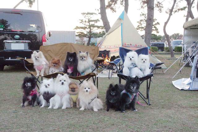 画像: 【愛知県・岐阜県】犬の同伴OKのおすすめキャンプ場3選 犬用の便利グッズも紹介! - ハピキャン(HAPPY CAMPER)