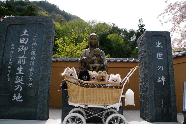 画像: 筆者撮影 愛犬と一緒に!
