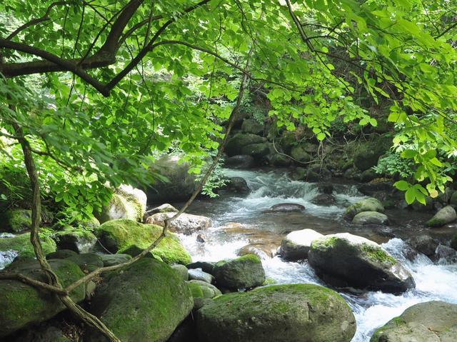 画像: 【栃木県・尚仁沢湧水】山脈から湧き出る壮大な清流が美しい! 採水もできてハイキングにピッタリ