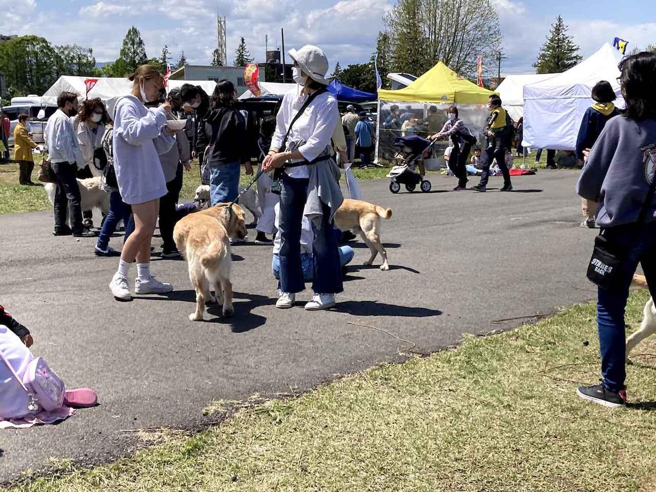 画像: ワンちゃん連れ、特に大型犬連れの方が多かった。