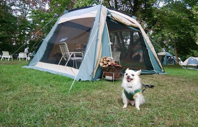 画像: 北海道でペット可のおすすめキャンプ場5選! ニセコサヒナキャンプ場や TOMO PLAYPARKなど - ハピキャン(HAPPY CAMPER)