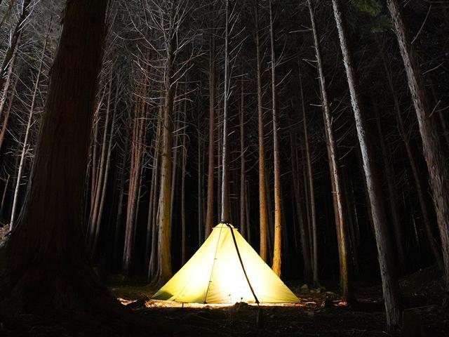 画像2: DOD(ディーオーディー)の新作テント「TREE LOVE(トゥリーラブ)」は木がメインポール?!新しいキャンプの楽しみ方を紹介