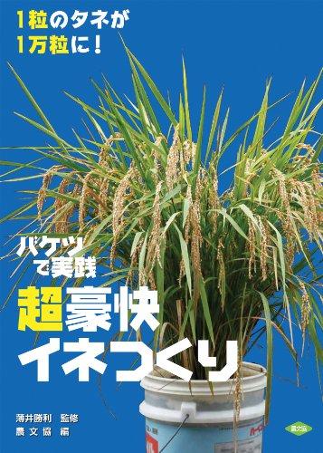 画像1: 【バケツ稲作り】ベランダに小さな「田んぼ」を作って米を育ててみた!季節を問わず栽培できるリボベジ(再生野菜)etcも紹介