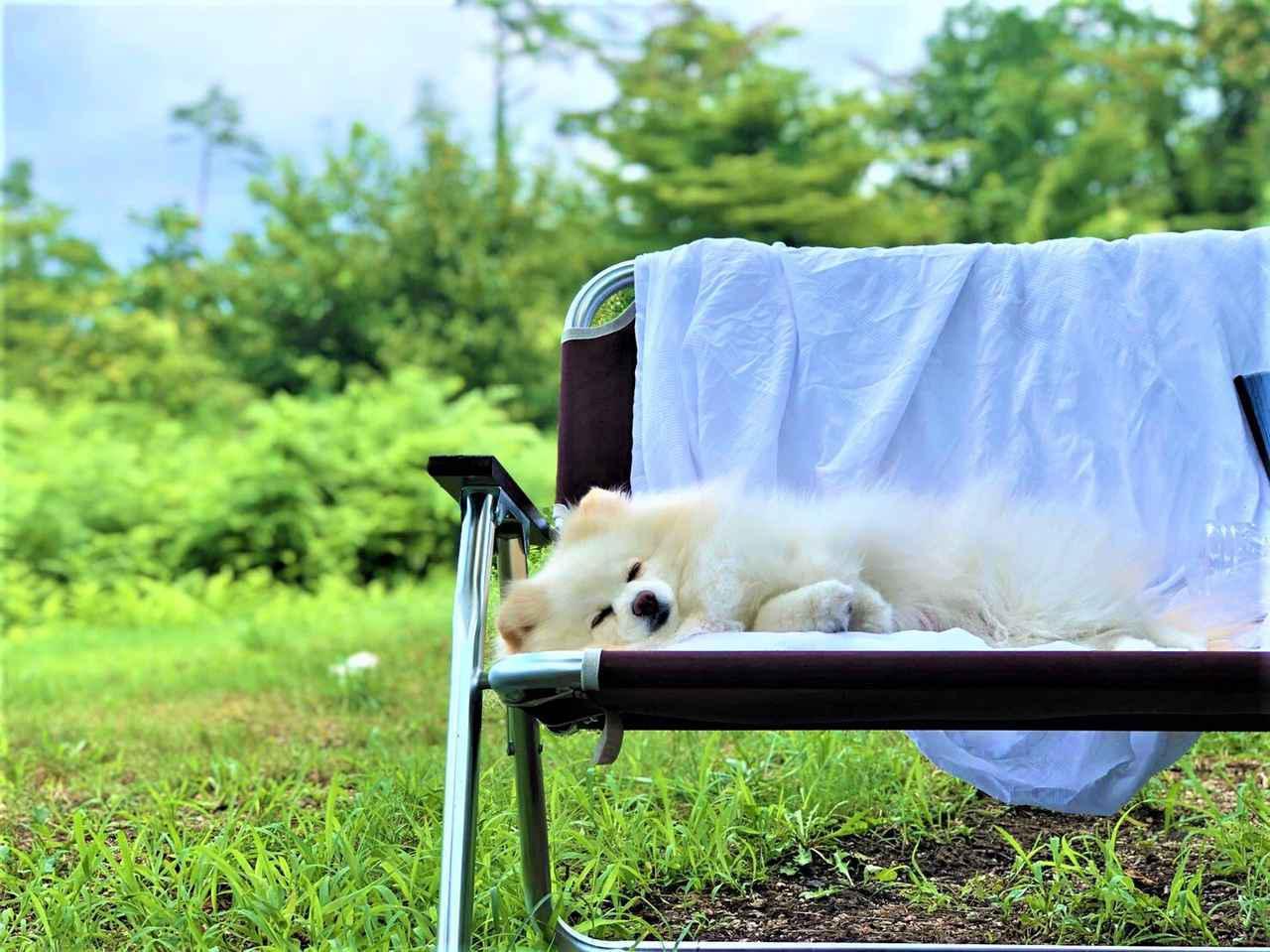 画像: 【夏の犬連れキャンプ】熱中症対策&関東近辺「ペットOK」おすすめキャンプ場3選 - ハピキャン キャンプ・アウトドア情報メディア