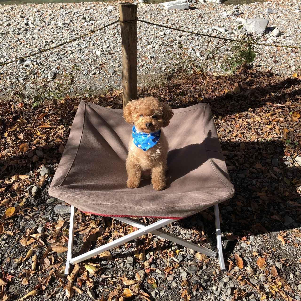 画像: スノーピーク(snowpeak)製ドッグコットを徹底レビュー 愛犬とキャンプへ行こう - ハピキャン キャンプ・アウトドア情報メディア