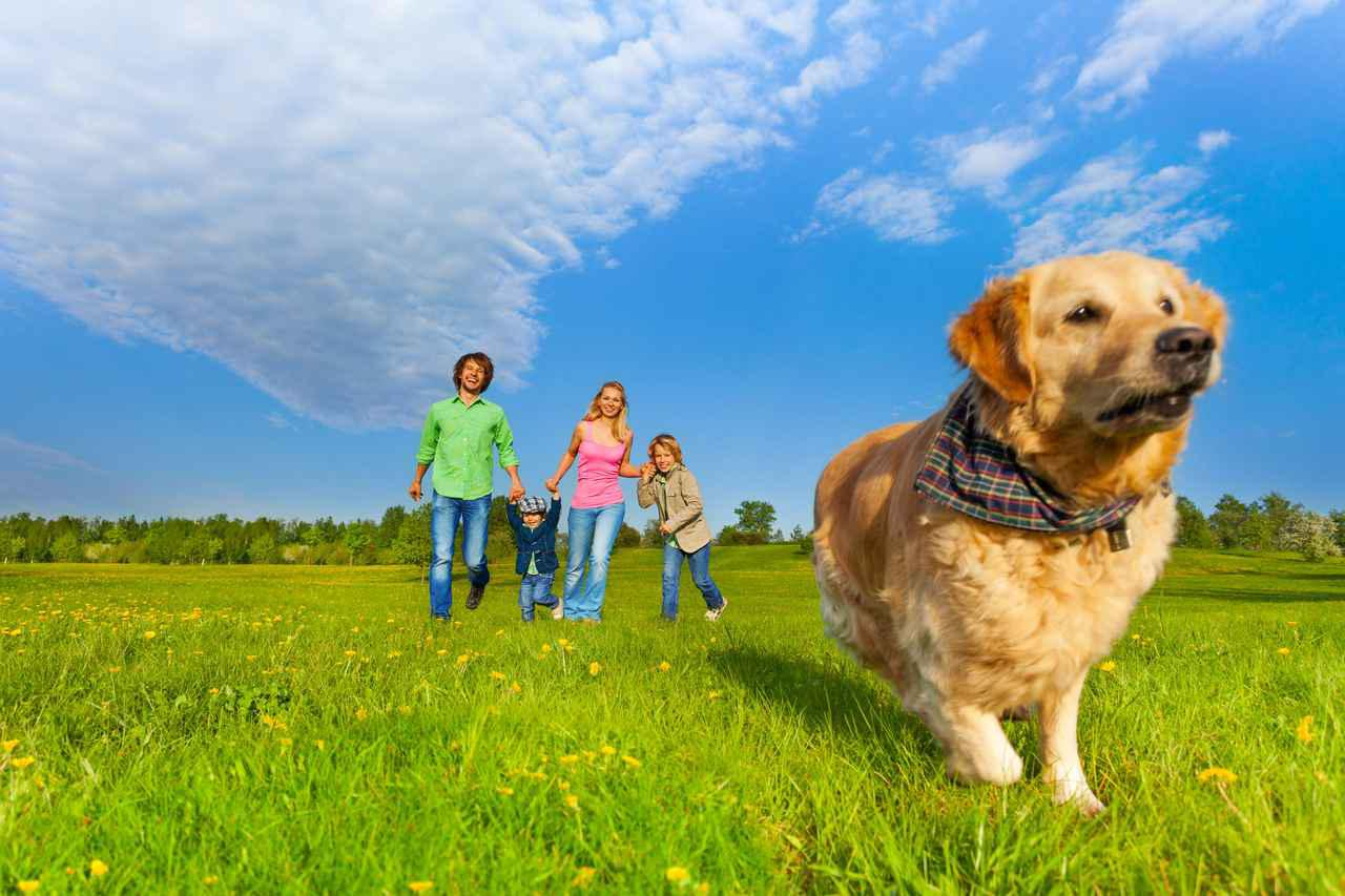 画像: 【関東近郊】ペット(犬・猫…)と一緒にお出かけ!アウトドアで遊べるスポットからお役立ちグッズまで - ハピキャン キャンプ・アウトドア情報メディア