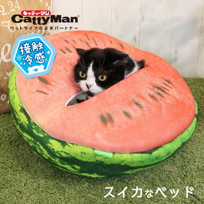画像6: 【With猫キャンプ】愛猫とキャンプを楽しむ筆者のおすすめアイテム&注意点を伝授します!
