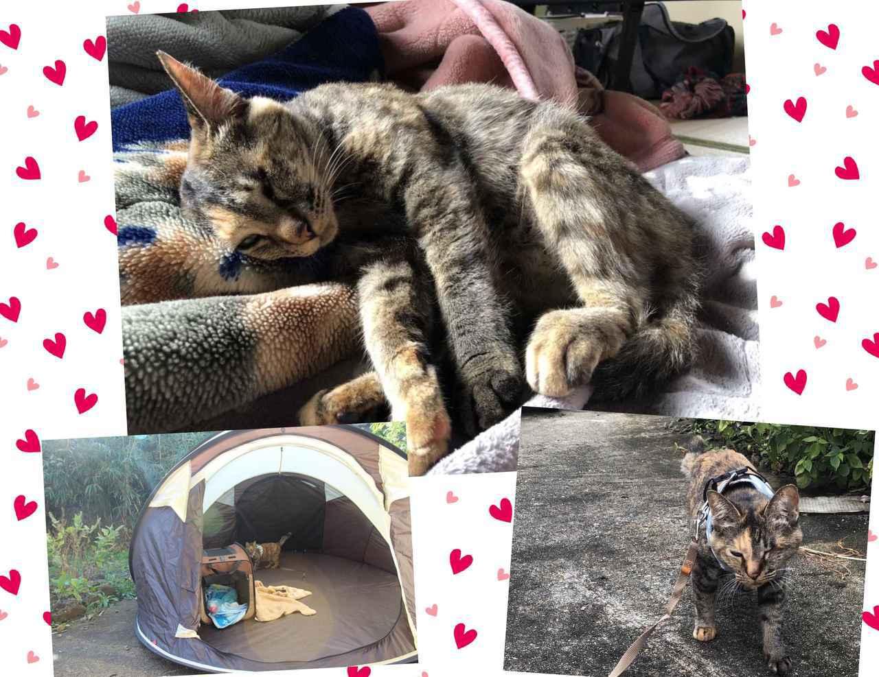 画像: 【体験レビュー】初めて〝愛猫と一緒〟に行くデイキャンプ!下準備や持ち物・気を配るべきポイントを徹底解説 - ハピキャン キャンプ・アウトドア情報メディア