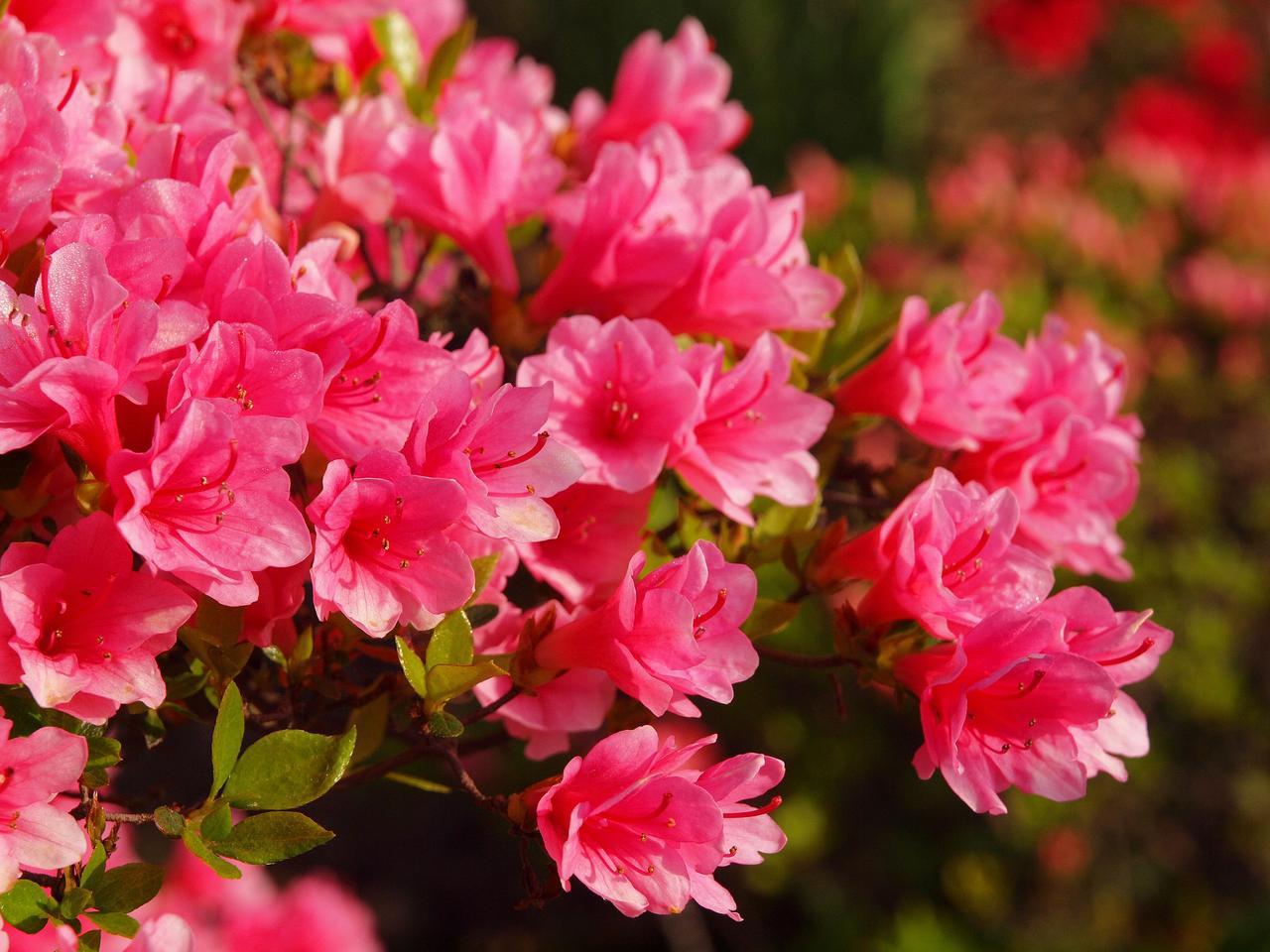 画像: 【関東近郊】花の綺麗な名山5選! 日帰り登山・ハイキングにもおすすめ◎ 気軽にお花畑を楽しもう - ハピキャン|キャンプ・アウトドア情報メディア