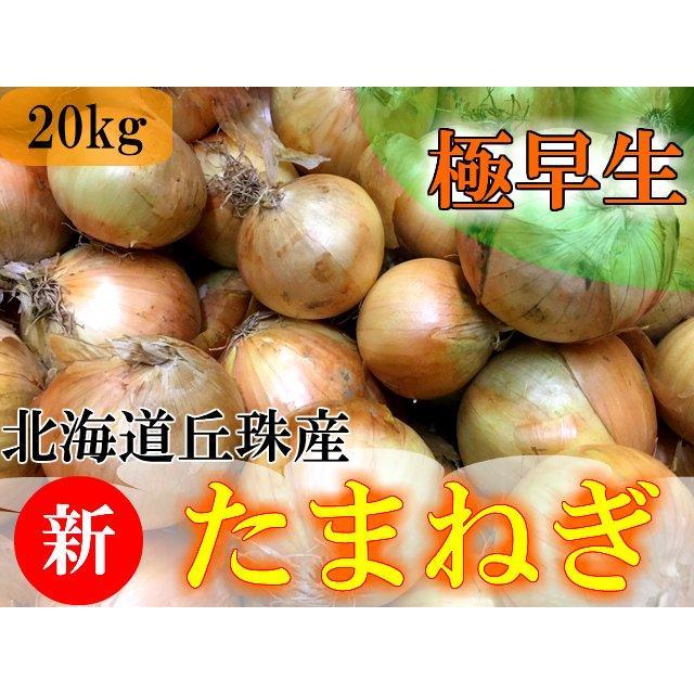 画像1: 【新玉ねぎレシピ】柔らかくて甘みの強い新玉ねぎを使った料理3選 玉ねぎとの違い&おすすめのレシピもご紹介