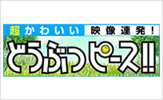 画像2: www.tv-tokyo.co.jp