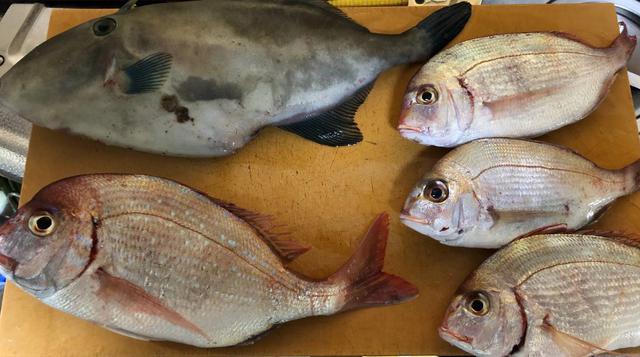 画像: 初釣りの釣果
