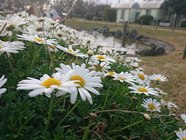 画像: キャンプ場に生えてた花