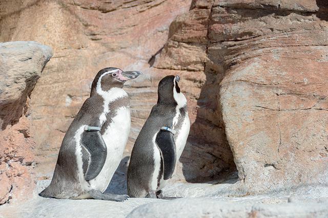 画像2: 至近距離でペンギンさんに遭遇!