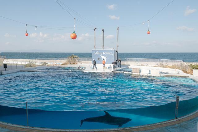 画像: 大阪湾を一望! イルカのいるステージへ