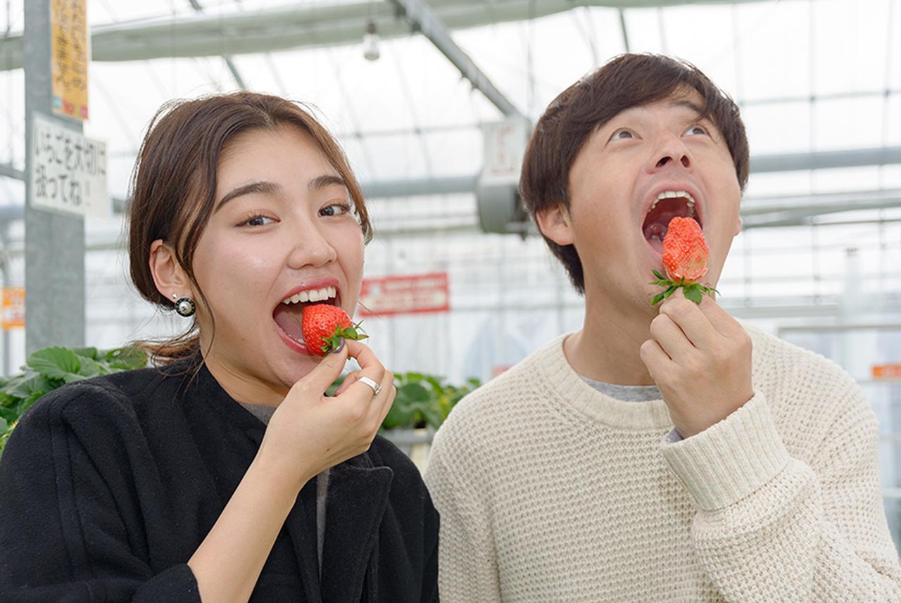 画像: さっそくいちごをパクリ!そのお味は?