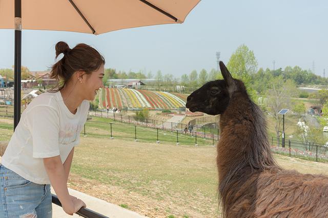 画像4: 動物ふれあい体験ができます!