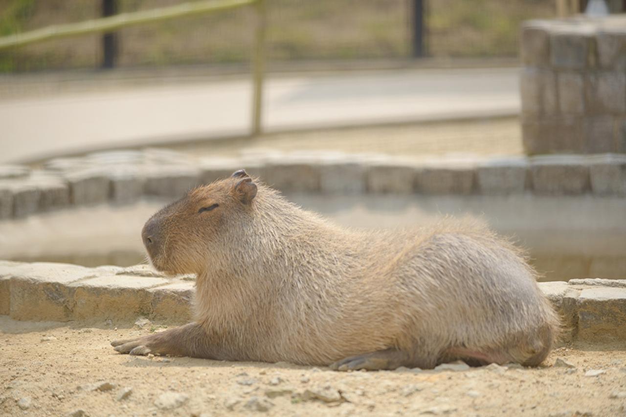 画像: かわいい動物に癒やされる〜!