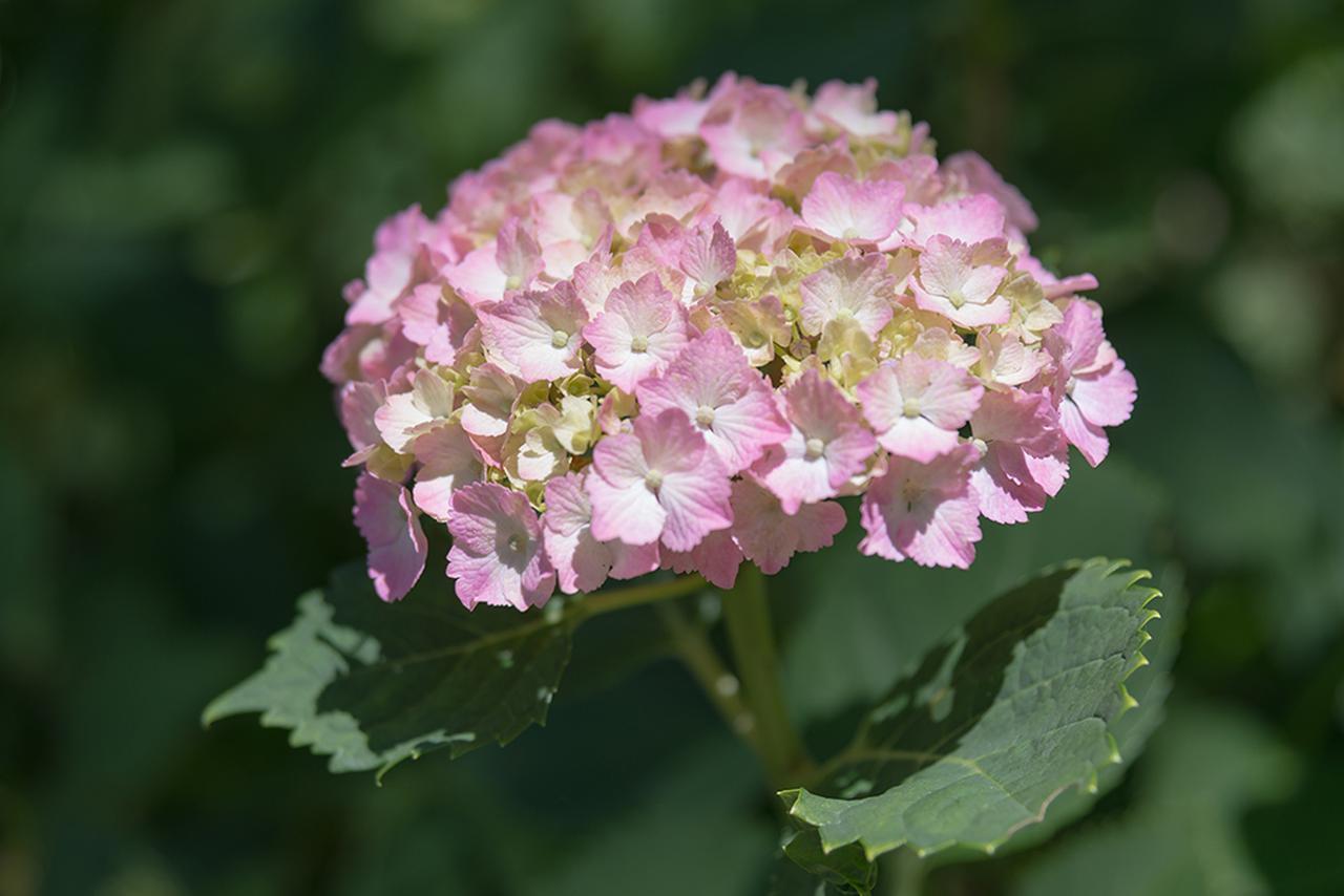 画像2: オシャレパッソで 富田林市農業公園サバーファームに行ってきました!