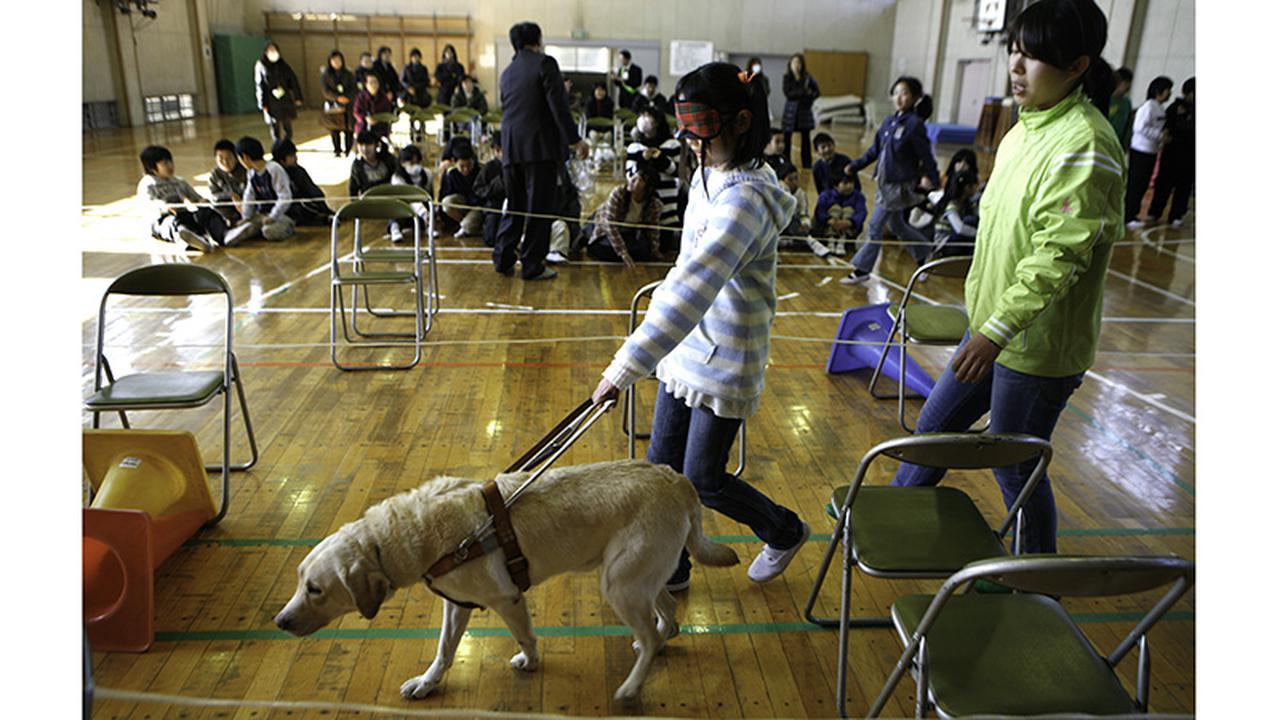 画像: 学校で行われる体験学習(写真提供:アイメイト協会)