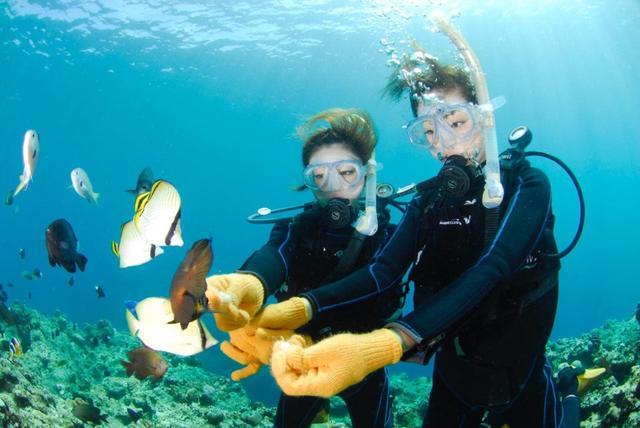 画像: 海中を泳ぐ魚に餌づけができるコースもあります(写真提供:マリンクラブ ナギ)