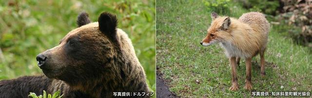 画像1: 山の野生動物に出会えるガイドツアーはウトロや羅臼で