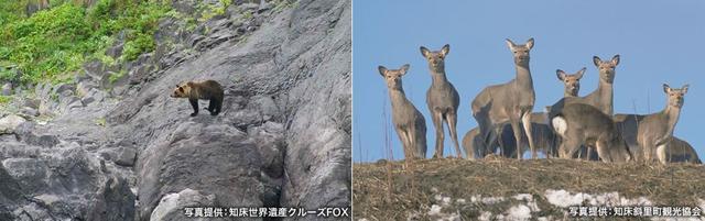 画像2: 山の野生動物に出会えるガイドツアーはウトロや羅臼で