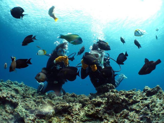 画像: 沖縄の青い世界を楽しみましょう(写真提供:マリンクラブ ナギ)
