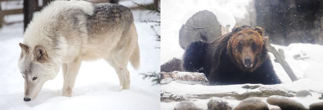画像: 「札幌市円山動物園」で動物たちに癒される