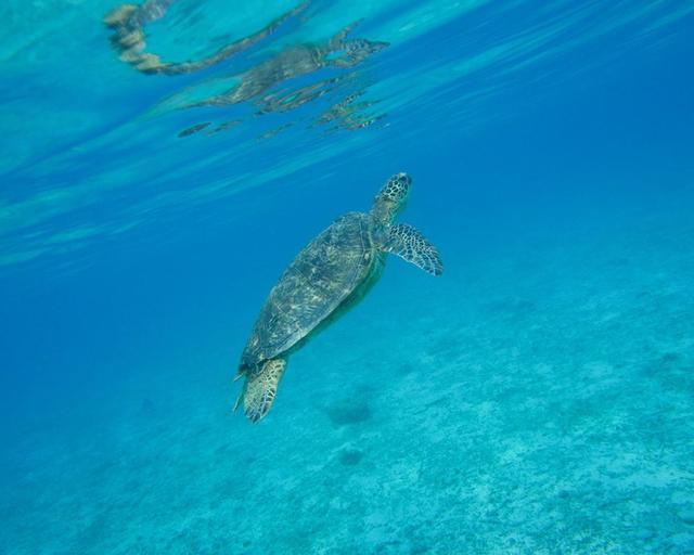 画像4: 海、空、人。移り住み6年、写真家・藤代冥砂が綴る「沖縄のあお」