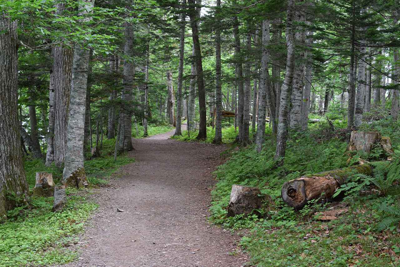 画像: 火山と森と湖が一体となった自然が広がる遊歩道。湖畔からの爽やかな風が心地いい