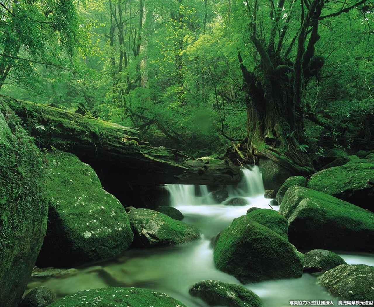 """画像: 日本初の自然遺産。美しき""""洋上のアルプス""""へ"""