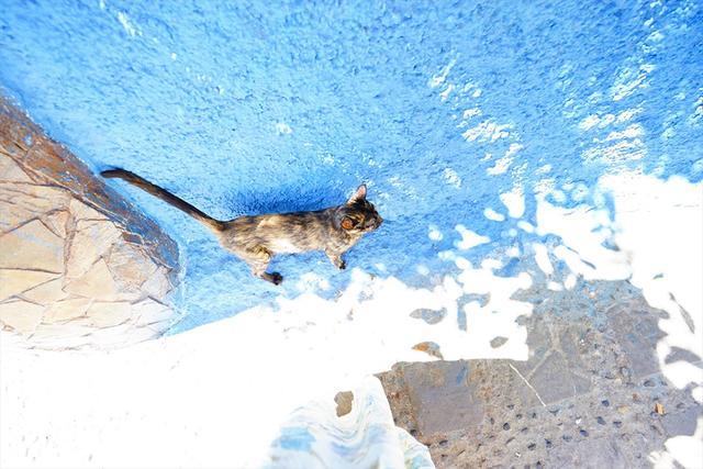 画像: 猫も壁の青色に吸い寄せられる