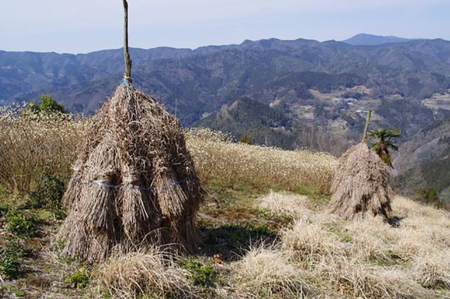 画像: 「コエグロ」で茅を干している様子 写真提供:PIXTA