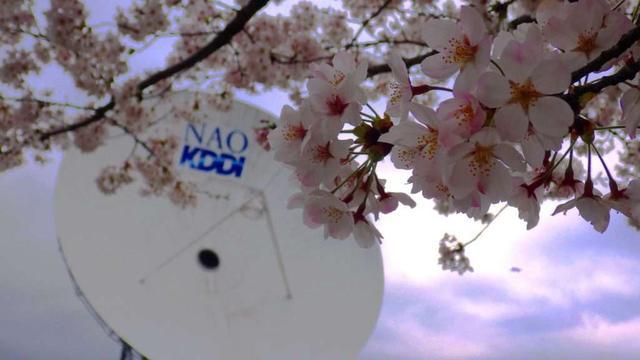 画像: 毎年4月上旬には、桜が見頃になる。ほか、ツツジや藤、サザンカなど四季折々の花や景色が楽しめる(写真提供:KDDI)