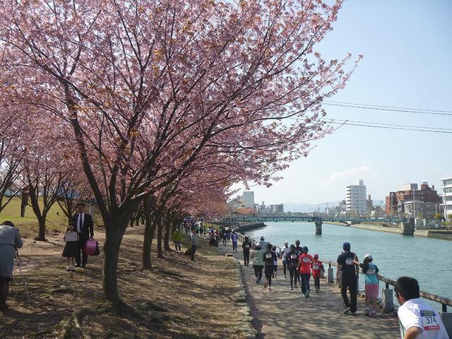 画像: 徳島中央公園を周回する「ファンラン」は家族で参加可能
