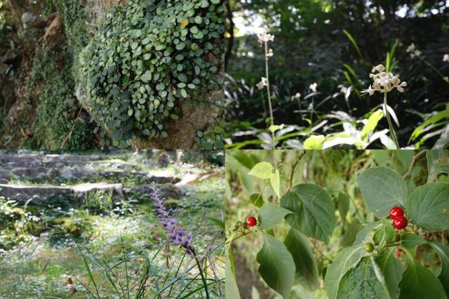 画像: 様々な植物を発見しながらの散策がおすすめ
