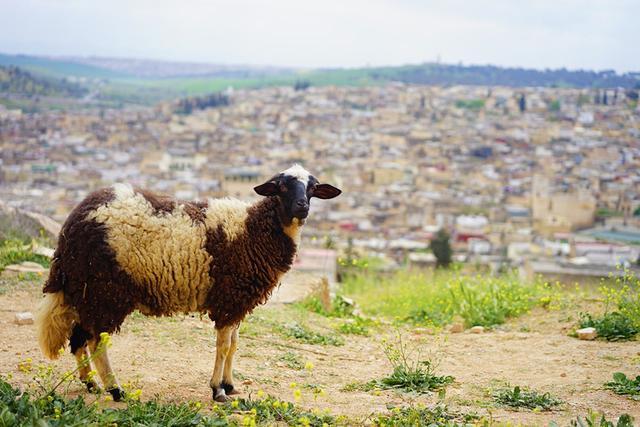 画像: フェズが見渡せる「マリーン朝の墓地」からの景色