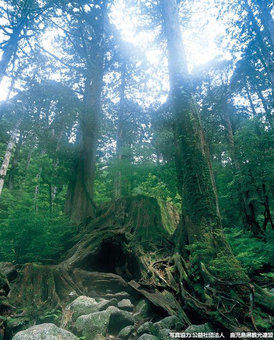 画像1: 自然遺産・屋久島