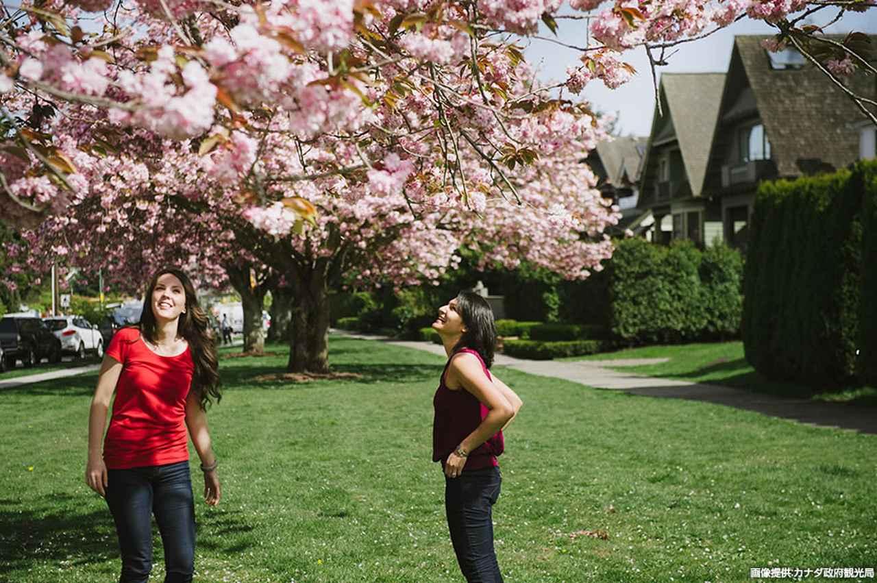 画像1: 「桜まつり」も開催される春のバンクーバーへ。