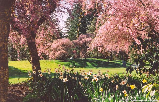 画像: バンデューセン植物園